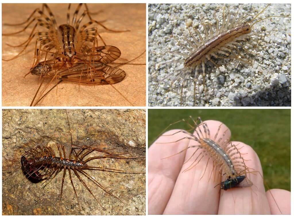 Если вы увидите в доме это насекомое — ни в коем случае не убивайте