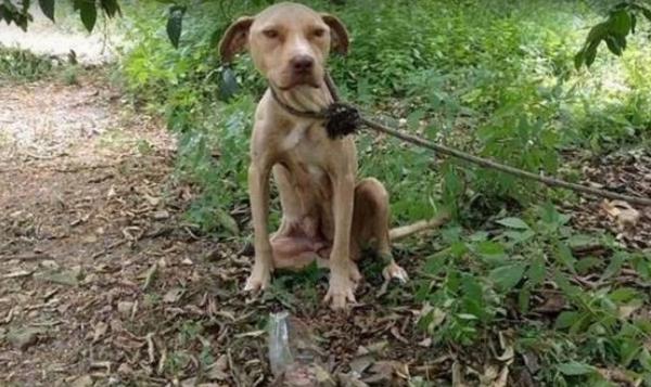 Беременную собаку оставили с…
