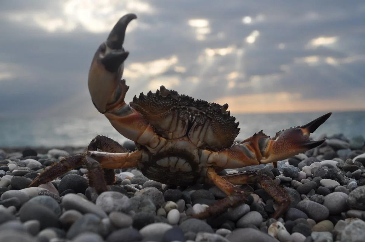 Будьте осторожны: ядовитые обитатели русского берега Черного моря