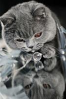 Кошки и Котята 9