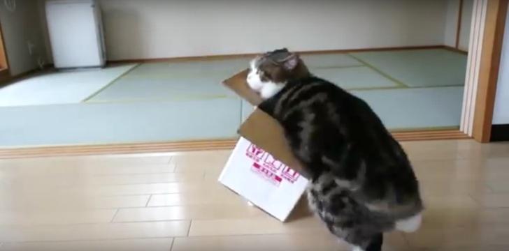 Мастер-класс от кота по укро…