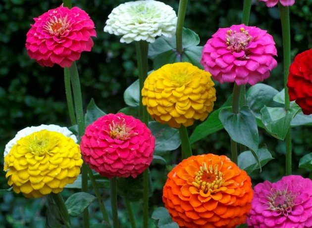 цвет, осени 22 (630x461, 299Kb)