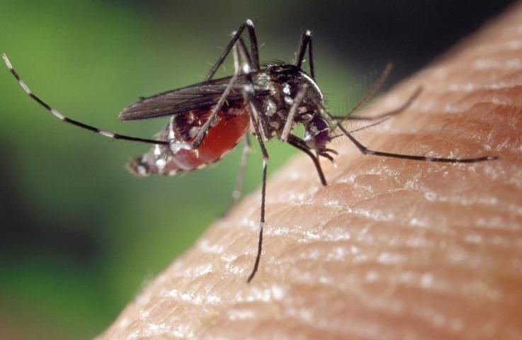Порхайте отсюда: как уничтожить комаров в один клик с помощью телефона