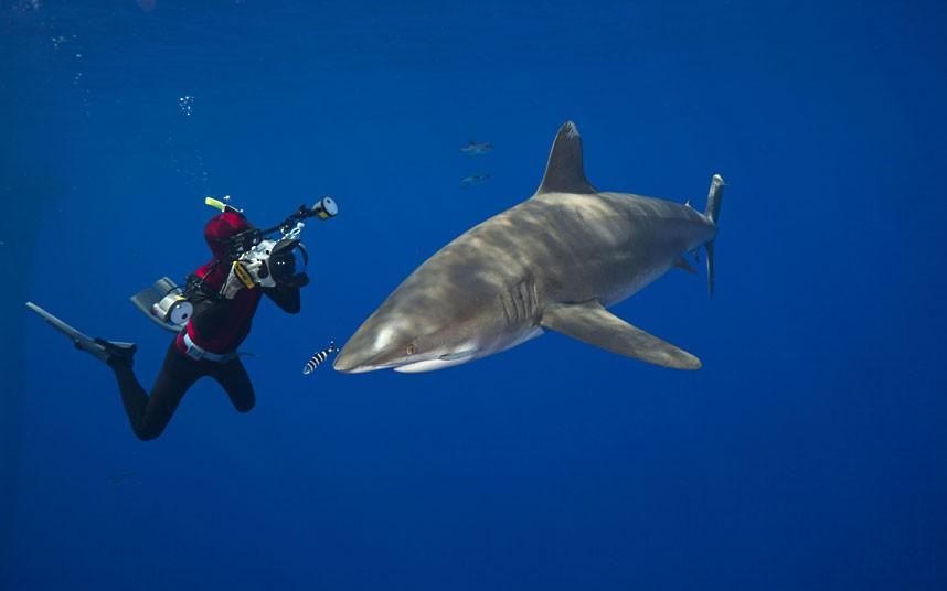 11105 Жизнь в океане   подводные фотографии Дэвида Флитэма