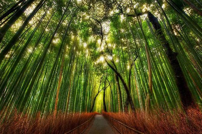 Восхитительные тропы и дороги мира