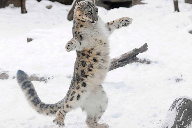 «Здравствуй, снег!»: 10 забавных фотографий животных, которые встретили зиму!