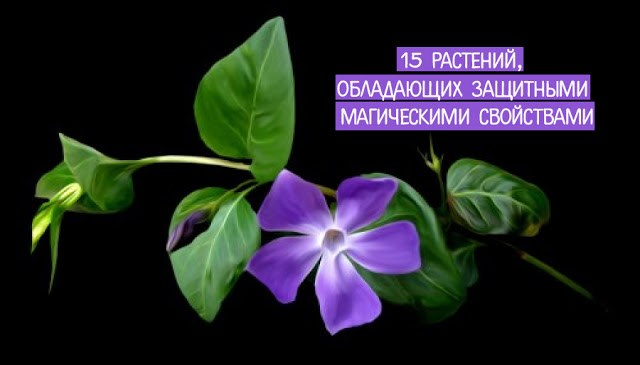 15 растений, обладающих защи…