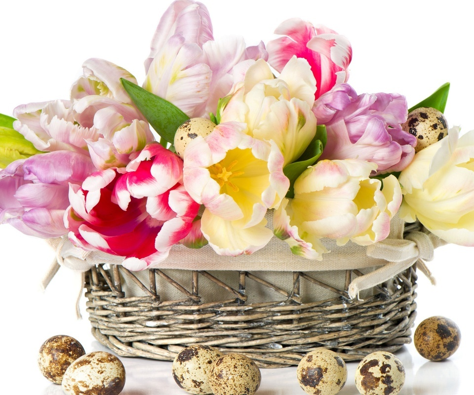 тюльпаны, перепелиные яйца, корзинка, яйца