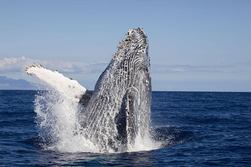 690 Жизнь в океане   подводные фотографии Дэвида Флитэма