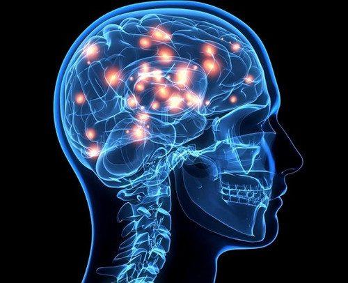 Как мозг формирует наши привычки