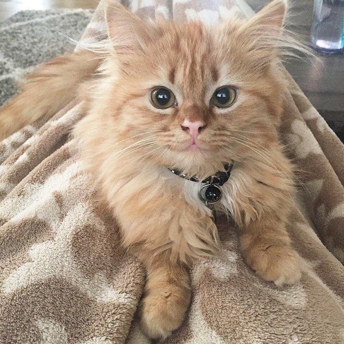 Эту кошку называют «Моной Лизой»