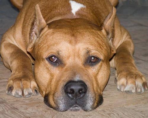 Поступок собаки