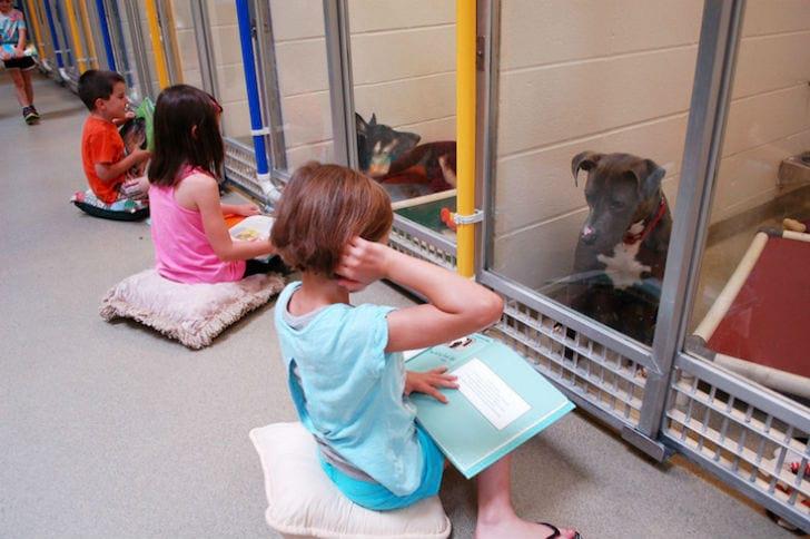 В приюте для животных реализовали интересный социальный эксперимент