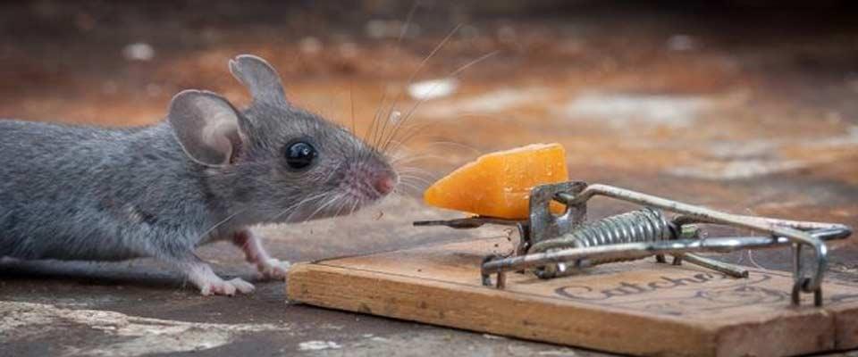 Мышкины мучения