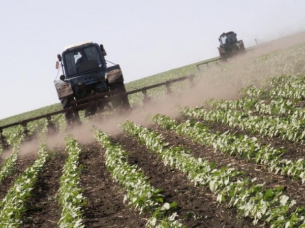 «Честь дороже свеклы»: Украинским сельхозпроизводителям грозит банкротство без российских удобрений