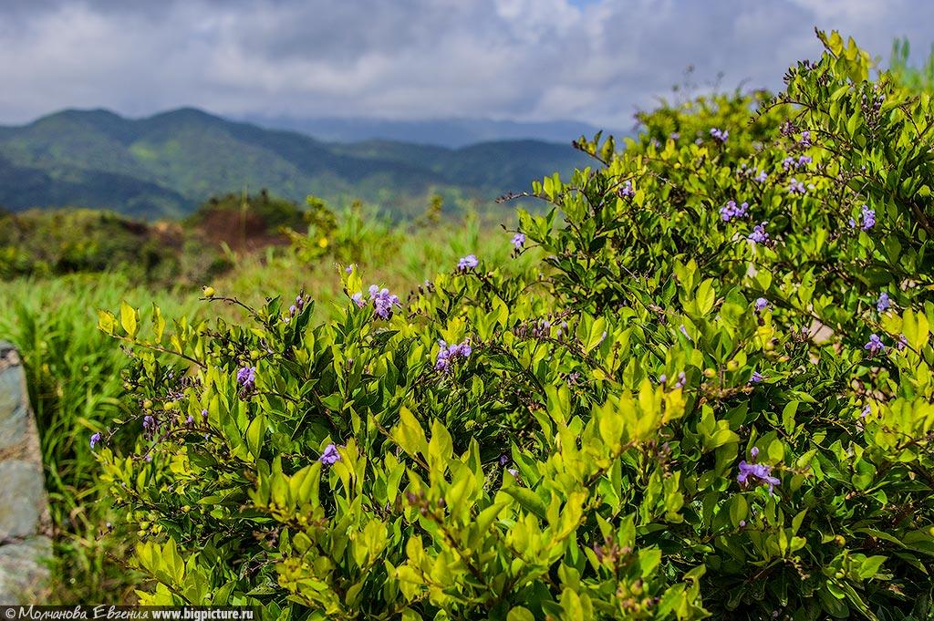 facts 57 75 фактов про Доминиканскую Республику
