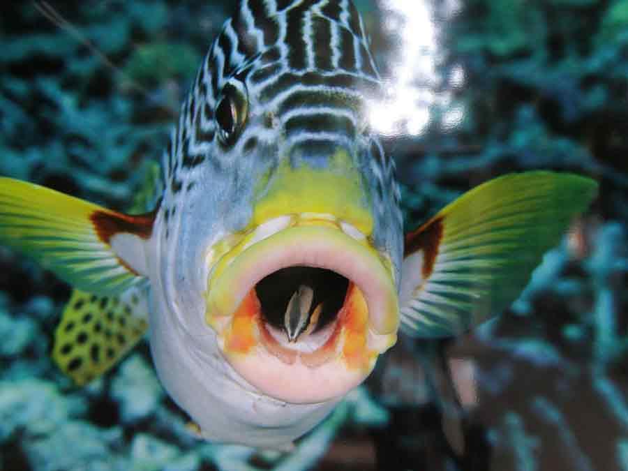 подводный мир океана скачать торрент