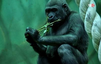 Нераспроданные в Москве елки скормили обитателям зоопарка