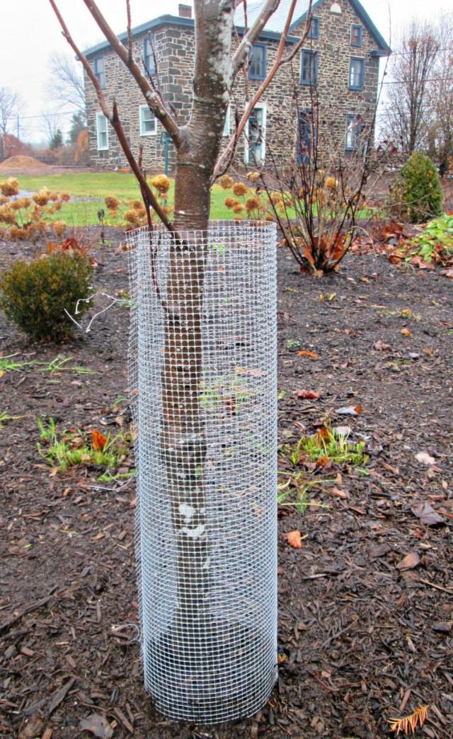 Защитная сетка вокруг ствола дерева