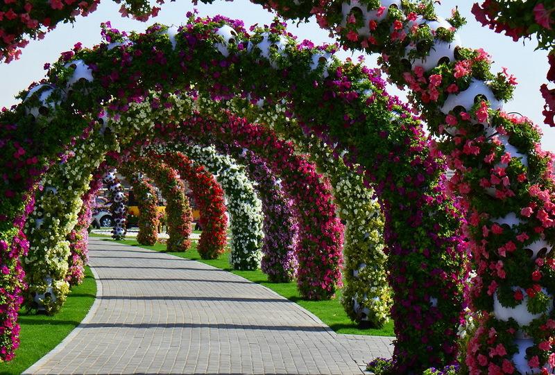 Сад из цветов