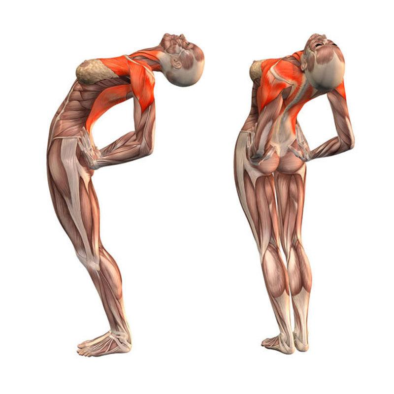 Эти упражнения улучшают кровоснабжение мозга, выпрямляют позвоночник, освобождает сосуды от зажимов.