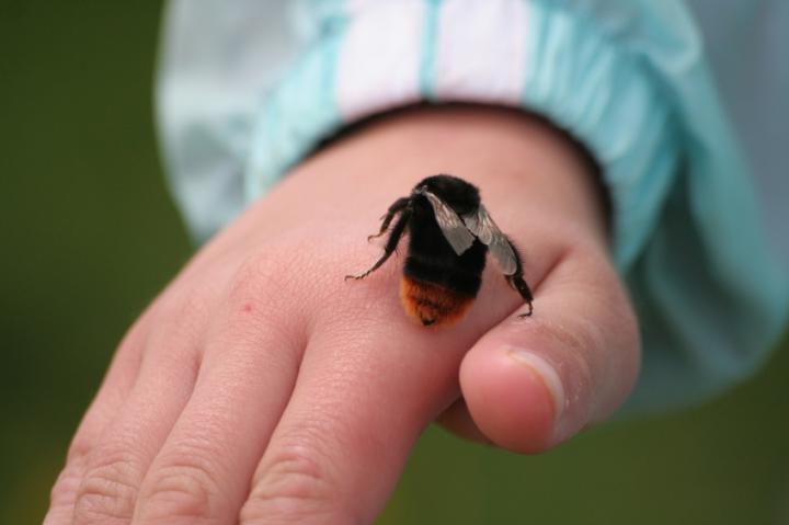 Анафилактический шок при укусе насекомых. Это надо знать