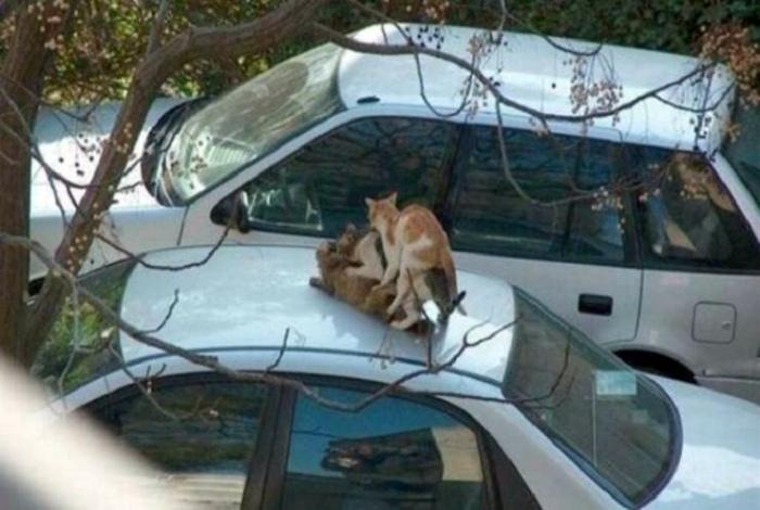 Романтическое свидание на крыше.
