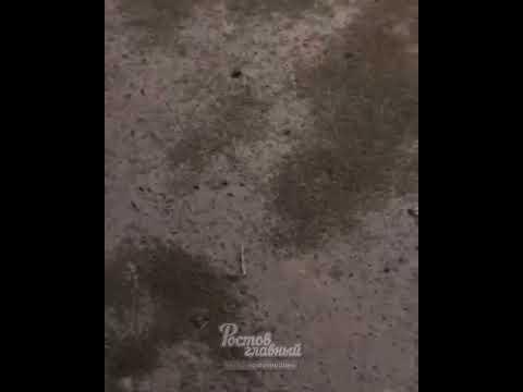 Комариный апокалипсис — Таганрог атаковали тучи комаров