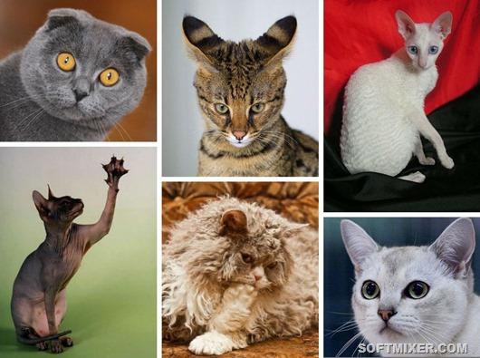 Тайны происхождения необычных котов