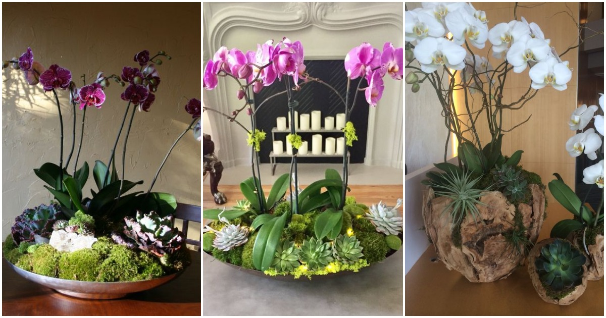 Красивые композиции из орхидей в миксованной посадке