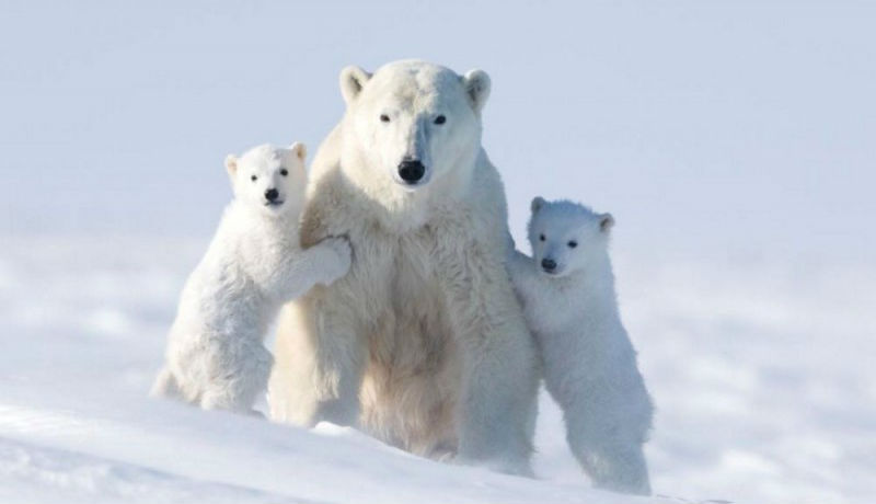 Фото, из-за которых фотограф провела на морозе 117 часов