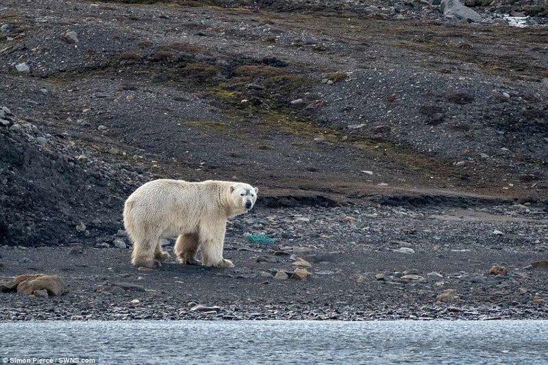 Сколько пластикового мусора в Арктике? животные, загрязнение окружающей среды, новости, пластик, пластиковые отходы, фото, экология, экспедиция