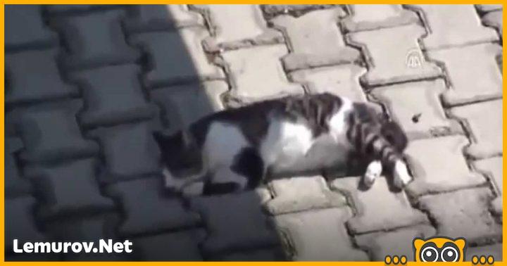 Если бы не этот пес, коту пришлось бы туго!