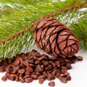 Кедровые орехи – залог здоровья