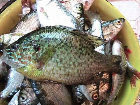 24. Неизвестные рыбы