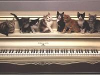 Кошки и Котята 2