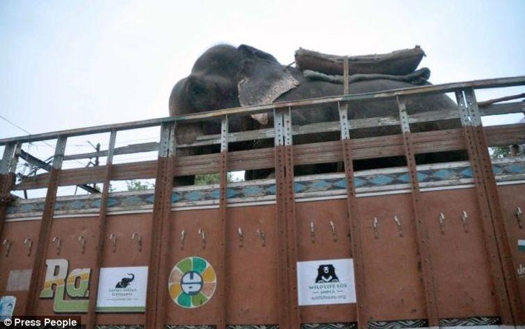 Radga06 Спасение слона, проведшего 50 лет в неволе, который плакал от счастья