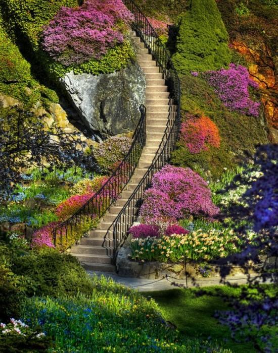 Дизайн в природе