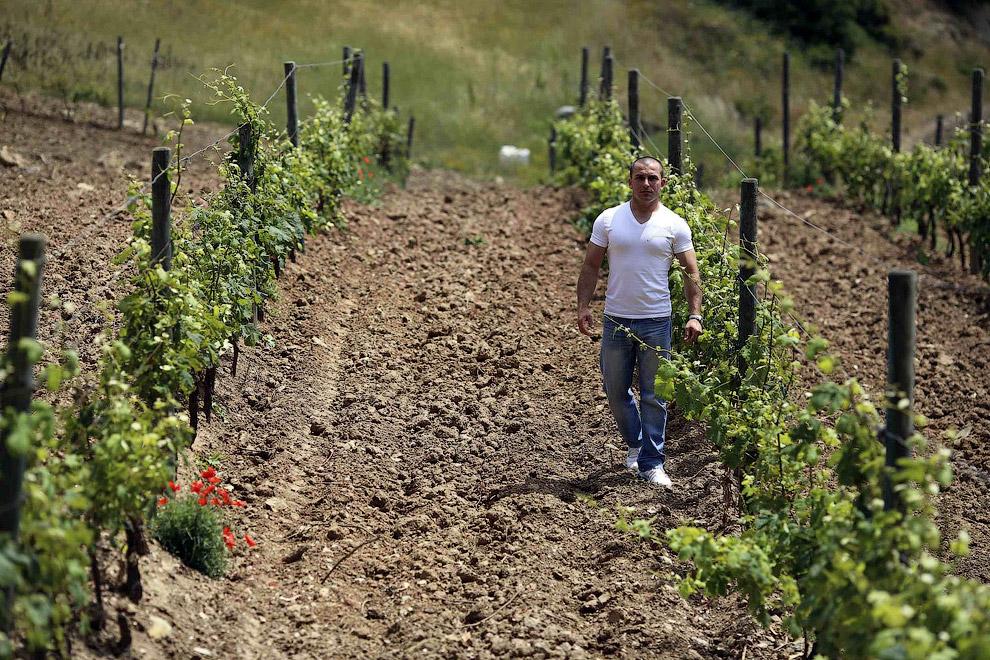 На самом маленьком и самом северном острове Тосканского архипелага отбывают срок заключенные, которые в качестве исправительных работ занимаются виноделием