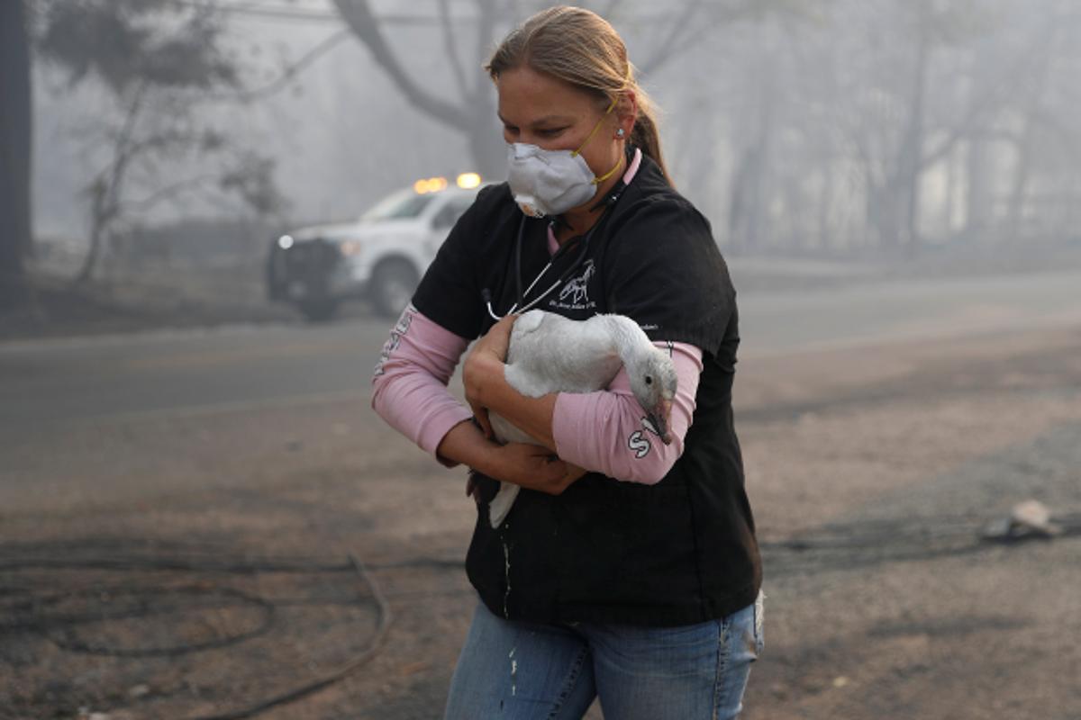 Лесные пожары в Калифорнии: …