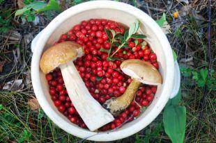 Еда фонит! Почему ягоды и грибы — самые радиационно опасные продукты?