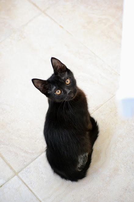 Особенный котенок срочно ищет дом!