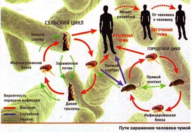 Убивающие хозяина паразиты биооружие древних?