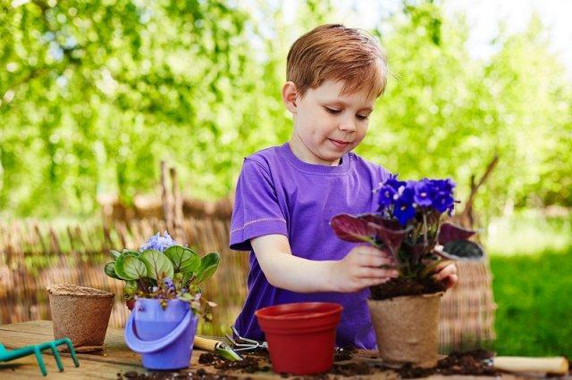 6 причин, почему не цветут фиалки у вас дома