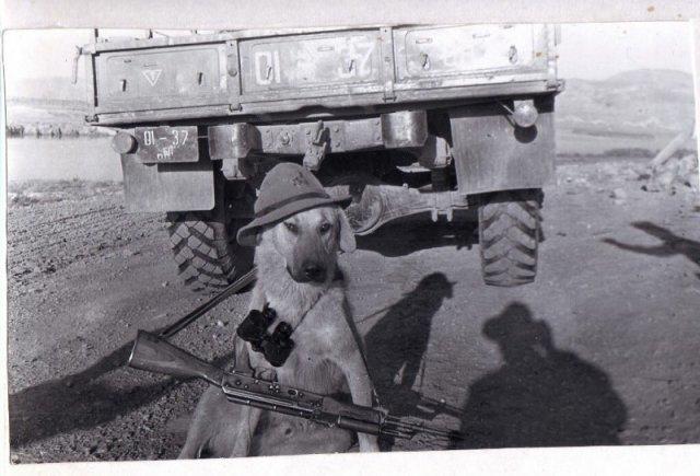 Боевой пес шурави в Афгане история, люди, мир, фото