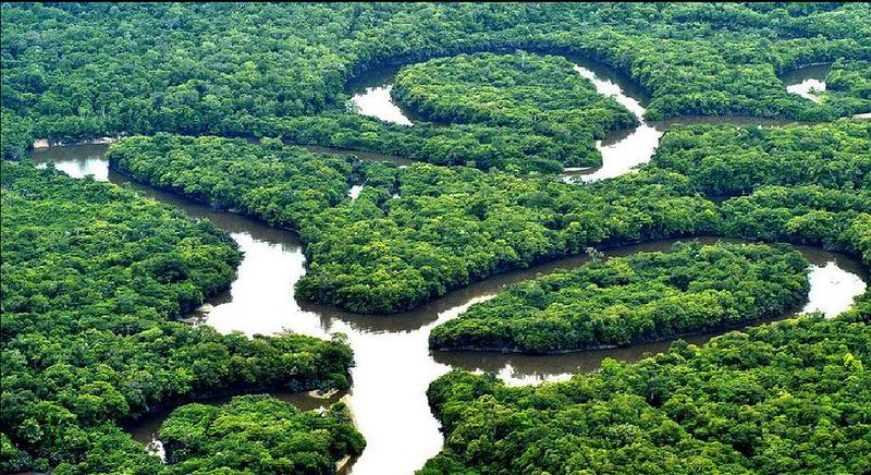 МИР ВОКРУГ.  Амазонские джун…