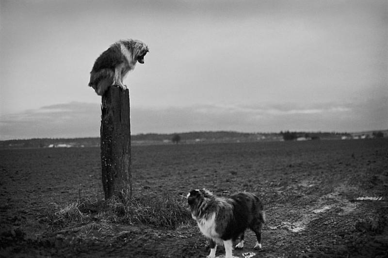 И такими они остались в памяти своей хозяйки собаки, фото собак, фотографии животных