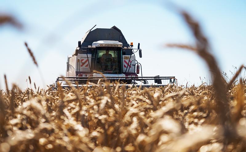 Рекордный урожай-2017: Хлеб все хуже, а крестьяне - беднее
