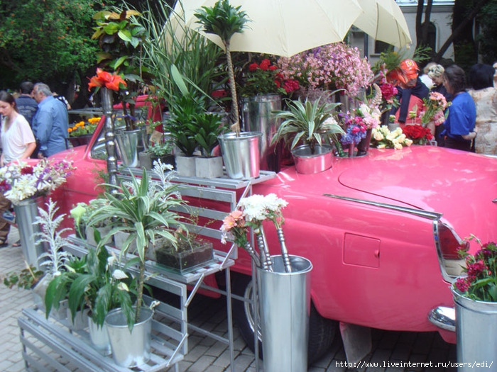 Фестиваль растений и цветов в Тбилиси