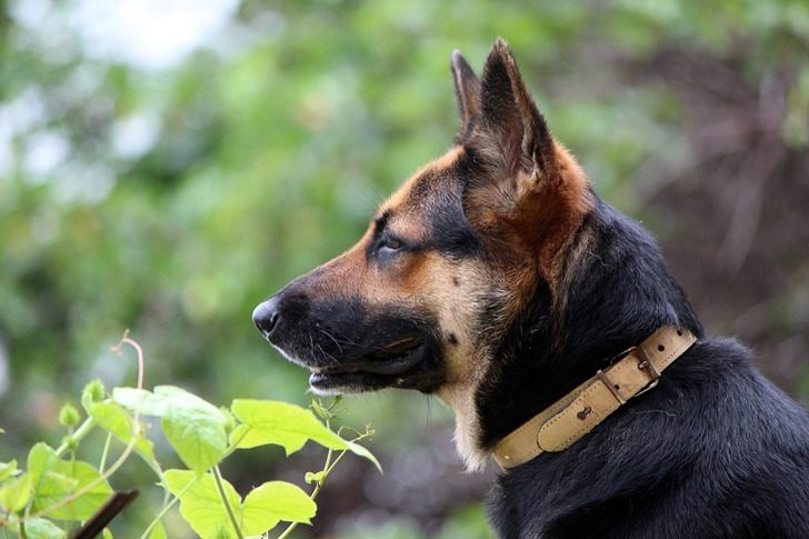 Служебный пес – герой задержаний, в этот раз рассмешил даже бандитов